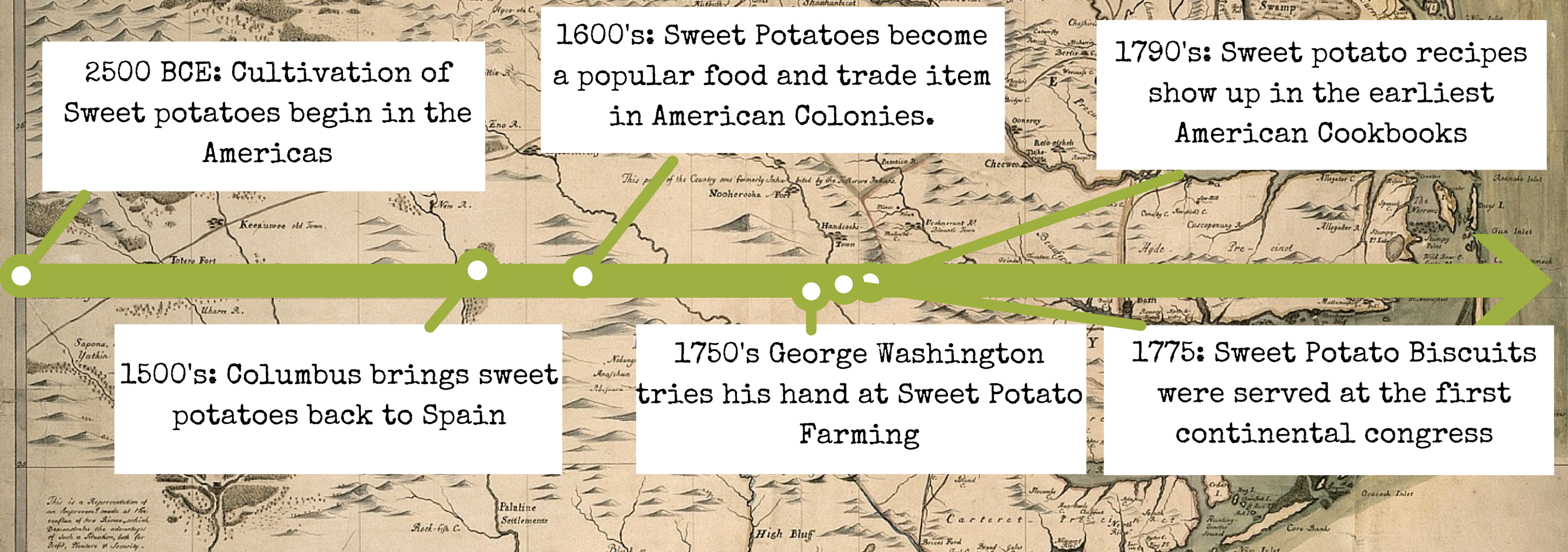 Timeline For Sweet Potatoes